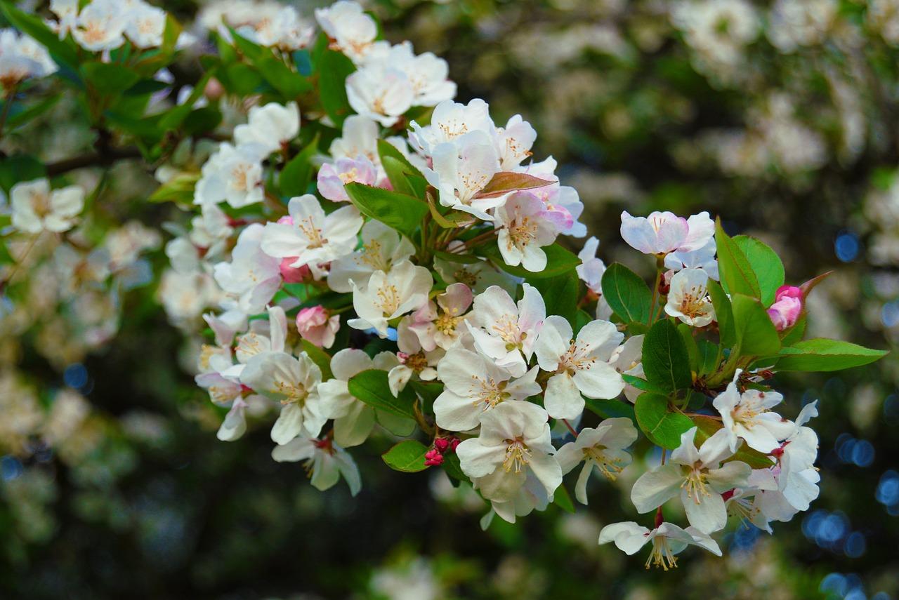 flowers-3338634_1280